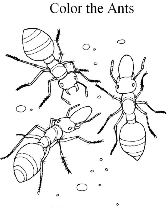 Printable Ant Coloring Pages Coloring Me