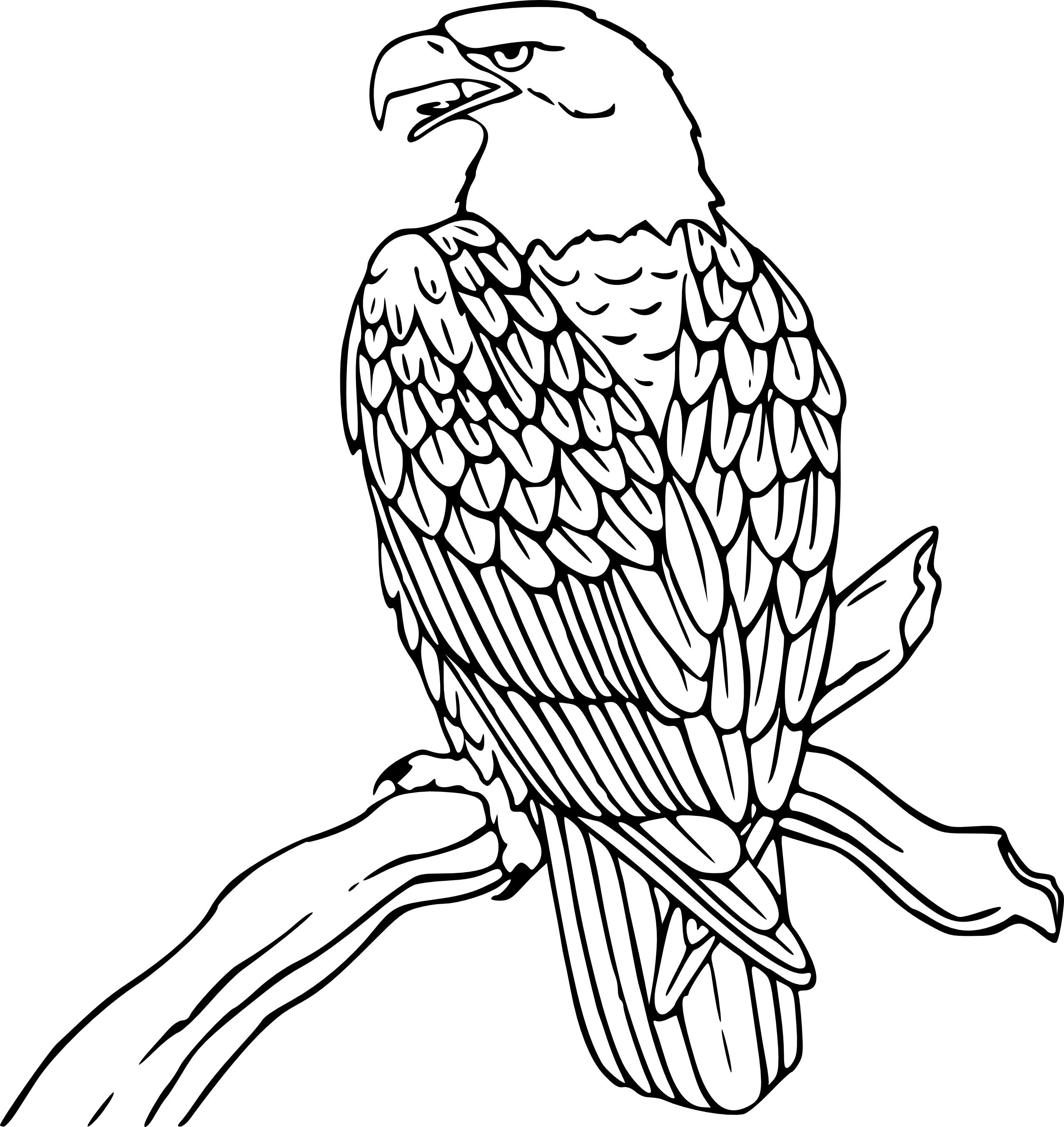 Uncategorized Eagle Coloring united states bald eagle coloring page murderthestout printable pages me