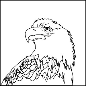 Bald Eagle Head Coloring Page