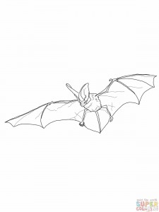 Bat Coloring Sheets