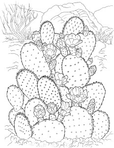 Cactus Flower Coloring Page