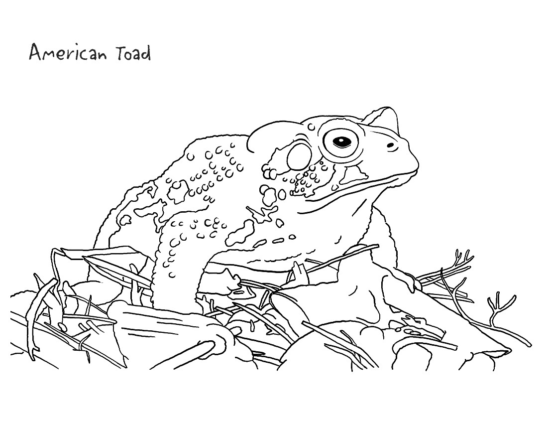 toad coloring pages - photo #27