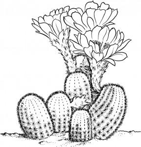 Desert Cactus Coloring Sheets