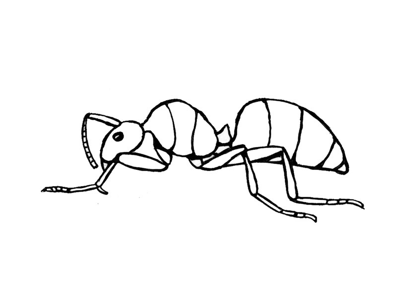 Free Ant Coloring Sheets