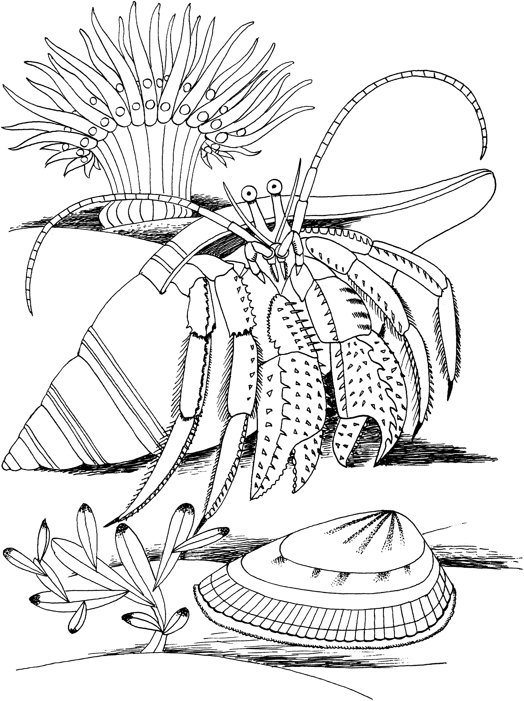 Printable Hermit Crab Coloring Pages Coloring Me - Coloring-pages-crab