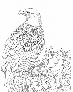 Free Printable Bald Eagle Coloring Pages