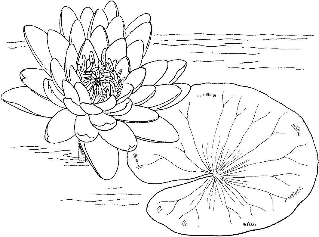 Printable Lily Pad Coloring Pages Coloring Me