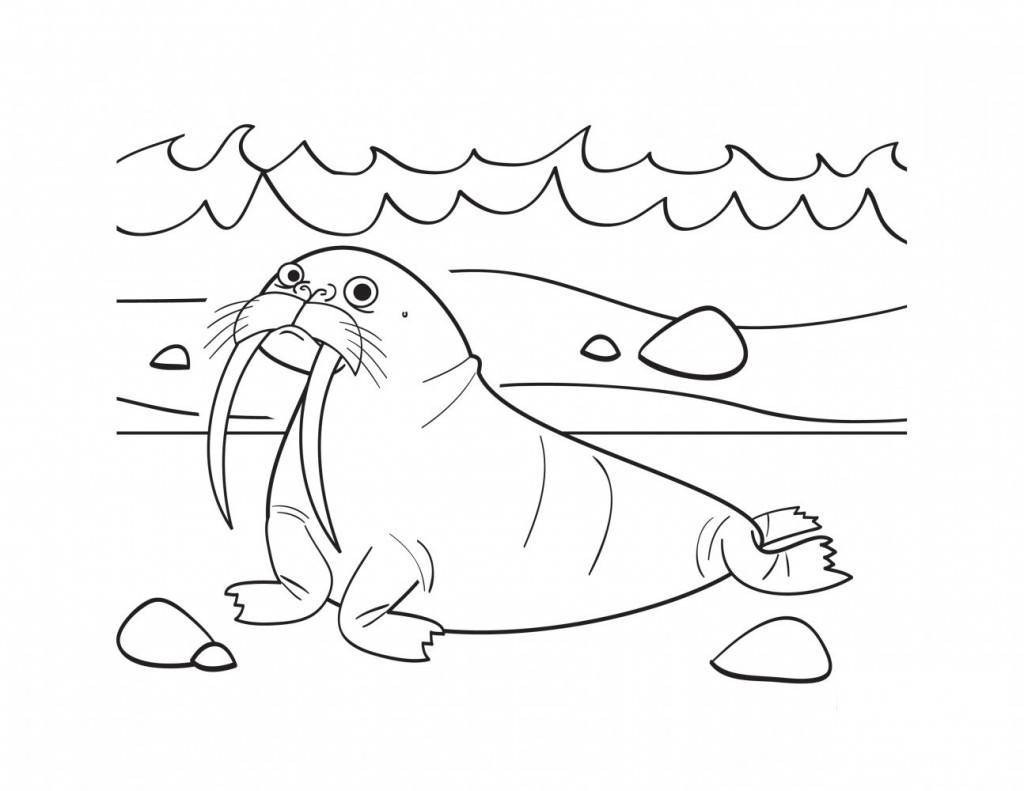 Walrus Drawing For Kids Printable walrus coloring pages coloring me