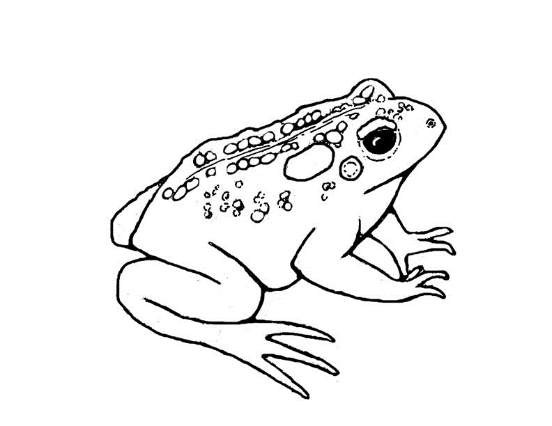 Nintendo Toad Coloring Pages