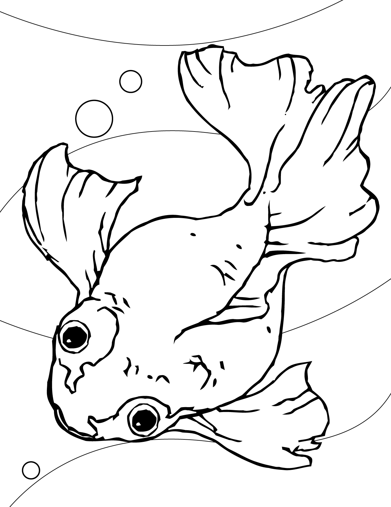 Freshwater Fish Coloring Pages. Goldfish Coloring Page Printable Pages  Me