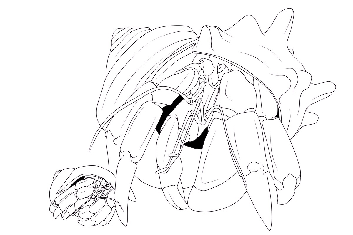 Hermit Crab Coloring Pages Printable