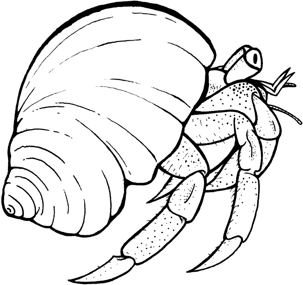 Hermit Crab Shell Art Hermit Crab Shell Coloring