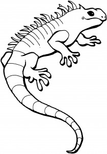 Iguana Coloring Pages Printable