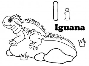 Iguana Coloring Pages Printables