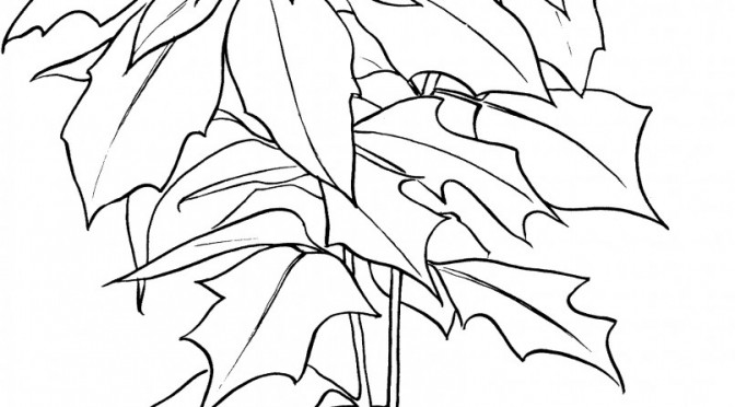 Poinsettia Coloring Page Coloring Pages