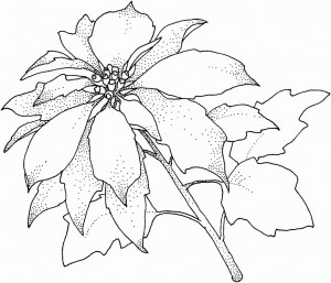 Poinsettia Flower Coloring Sheet
