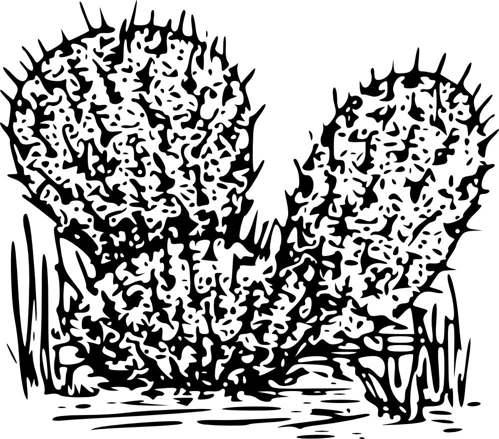 Printable Cactus Coloring Pages | Coloring Me