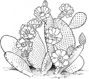Prickly Pear Cactus Coloring Sheet