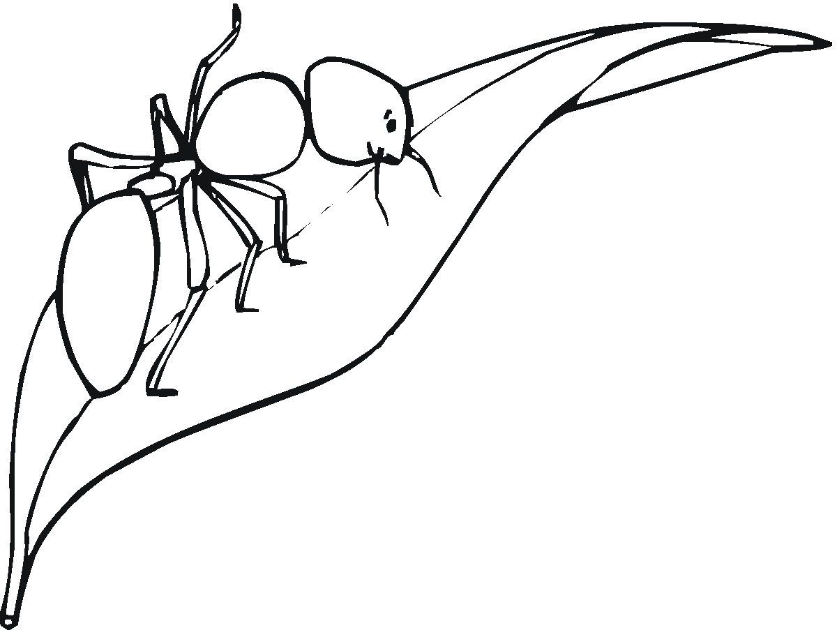 Printable Ant Coloring Pages Coloring Me Coloring Pages Ant
