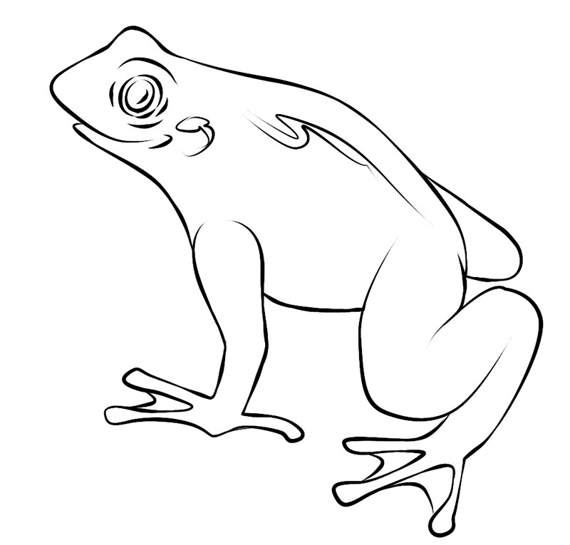 Printable Toad Coloring Pages