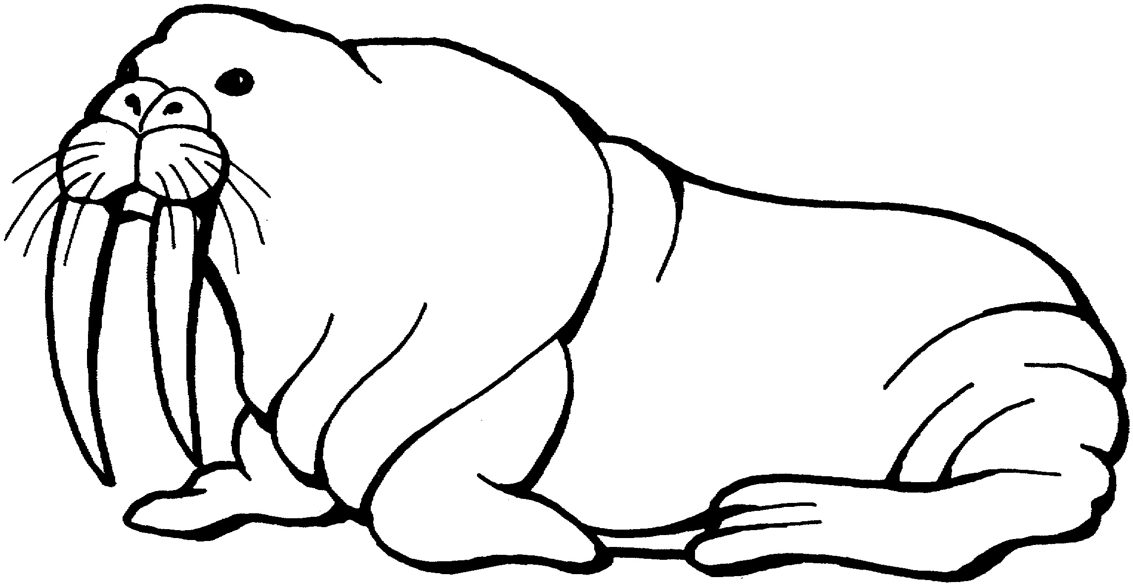 printable walrus coloring pages coloring me