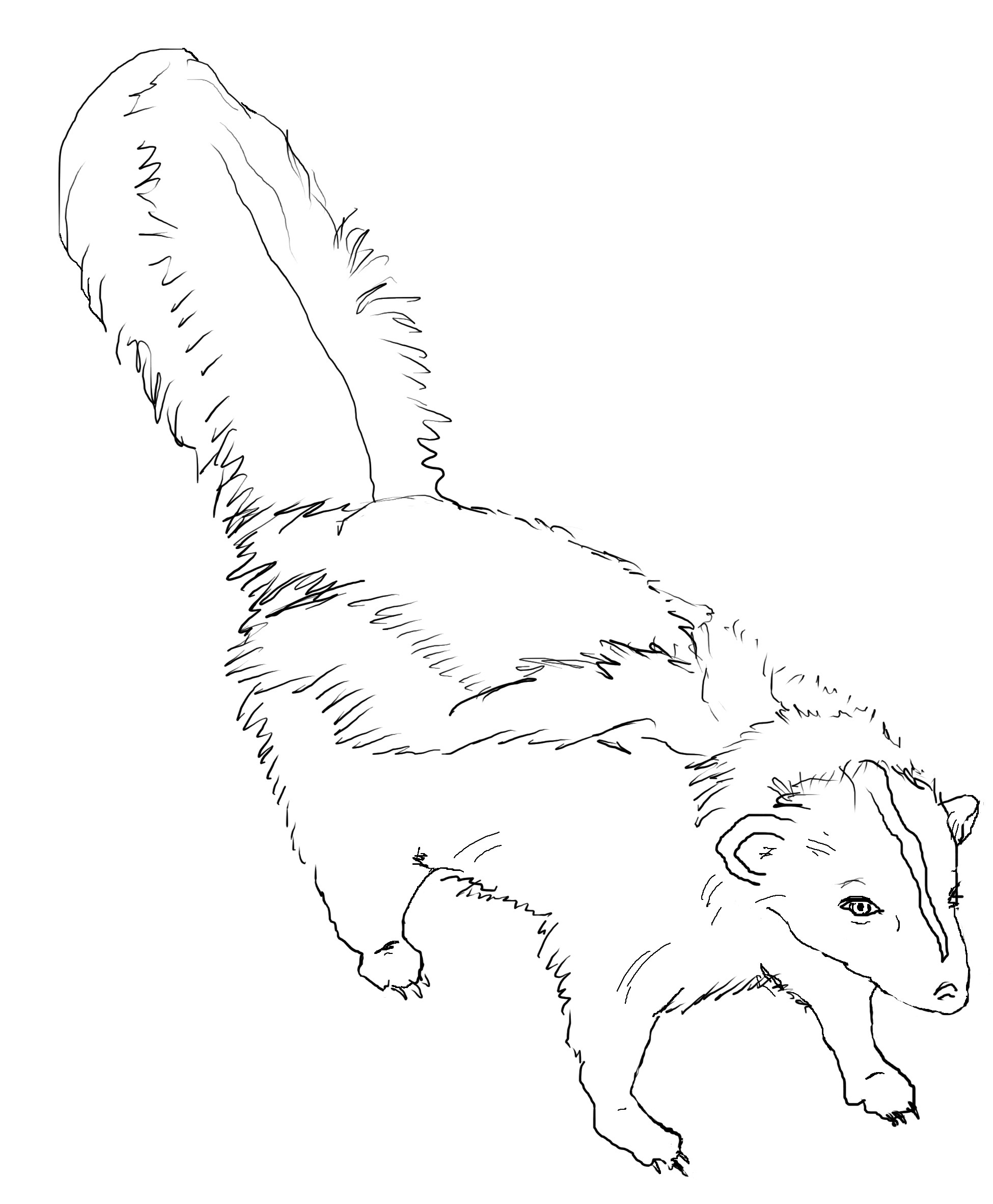 skunk coloring pages - photo#34