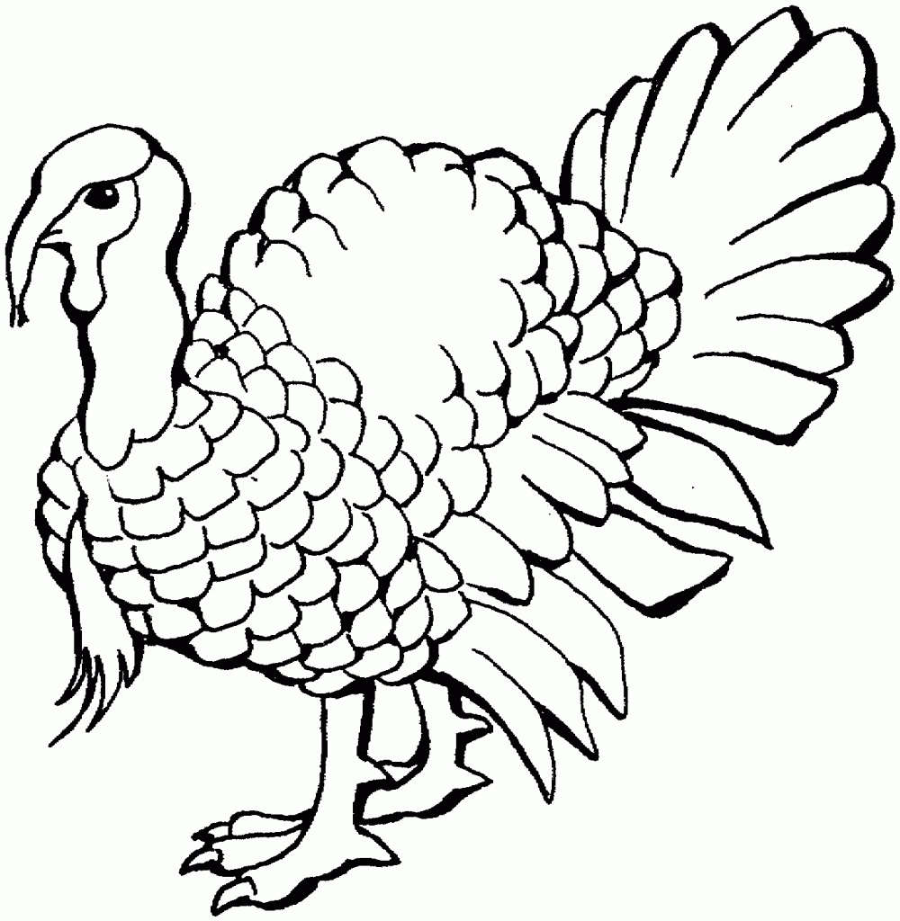 turkey color pages - Free Turkey Coloring Pages For Kids