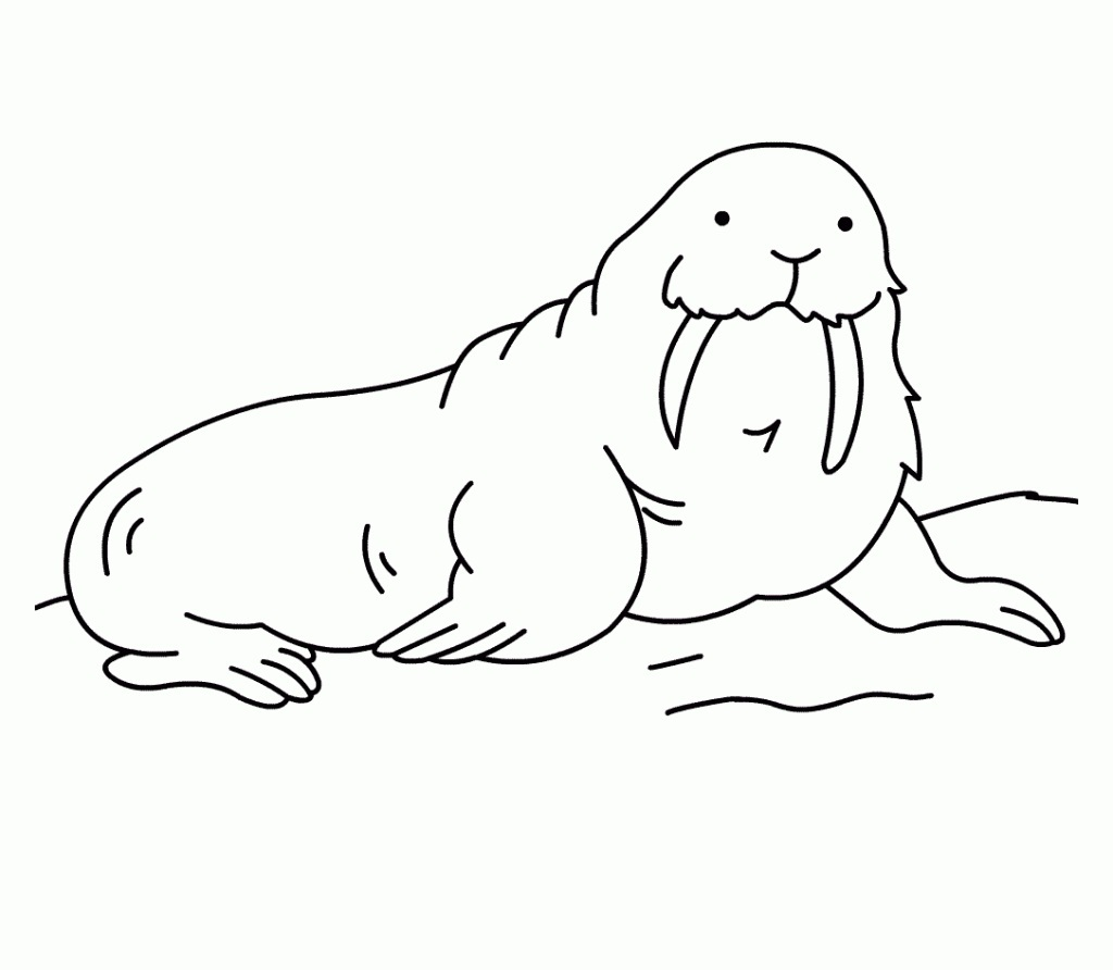Printable Walrus Coloring Pages | Coloring Me