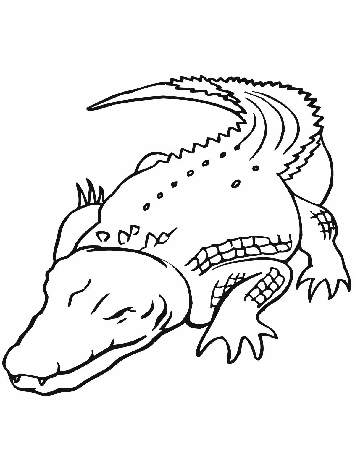 florida gators printable coloring pages - photo#25