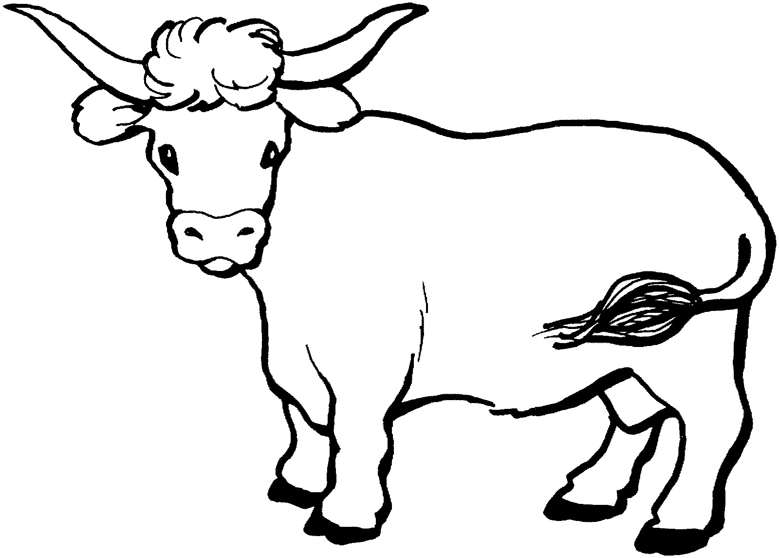 Cow coloring picture - photo#18