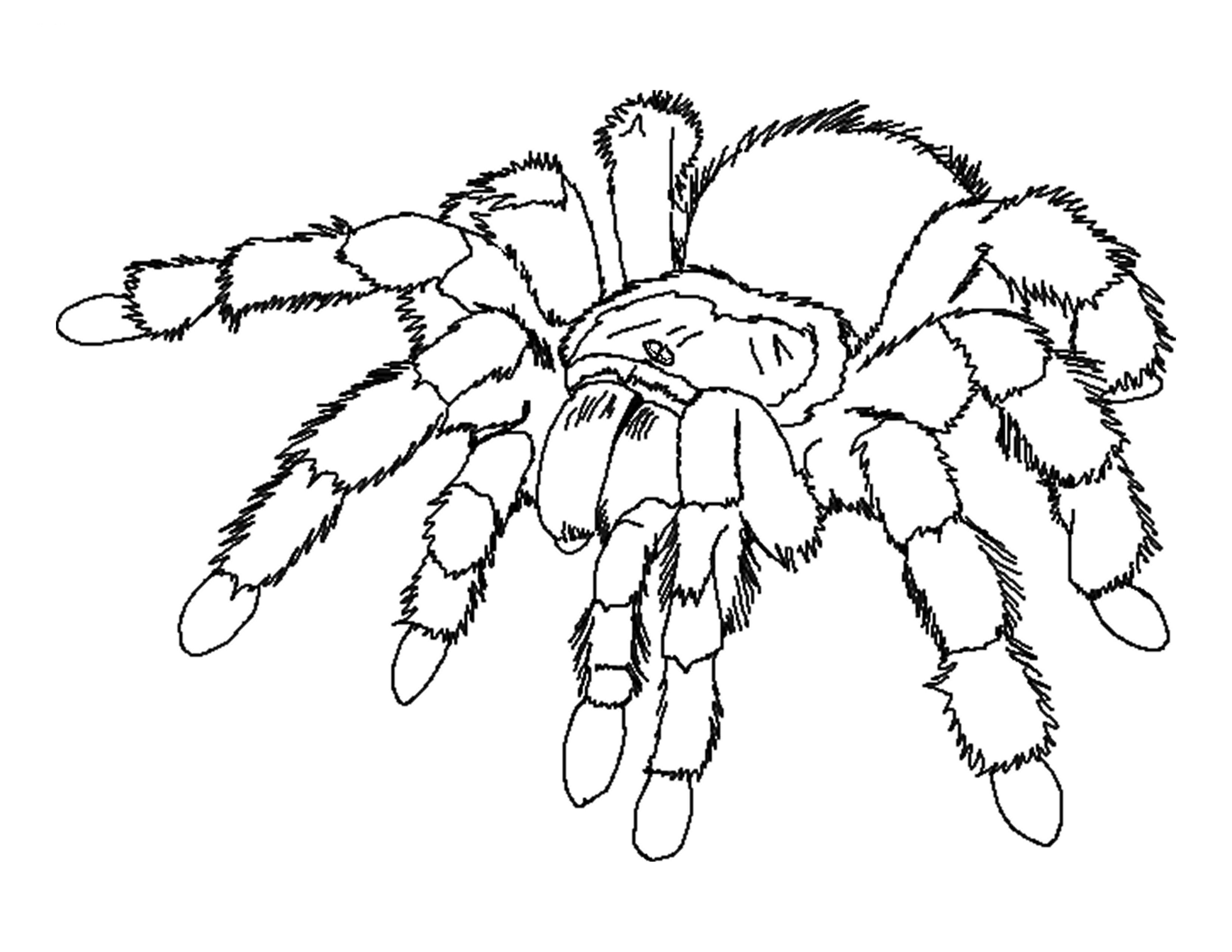 printable spider coloring pages coloring me