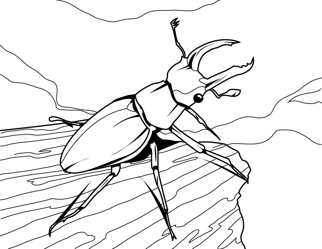 printable bug coloring pages coloring me
