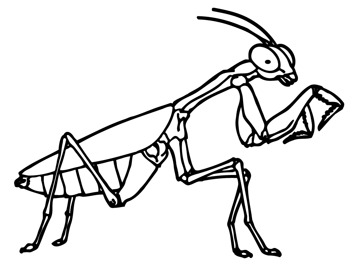 bug coloring book pages - photo#23