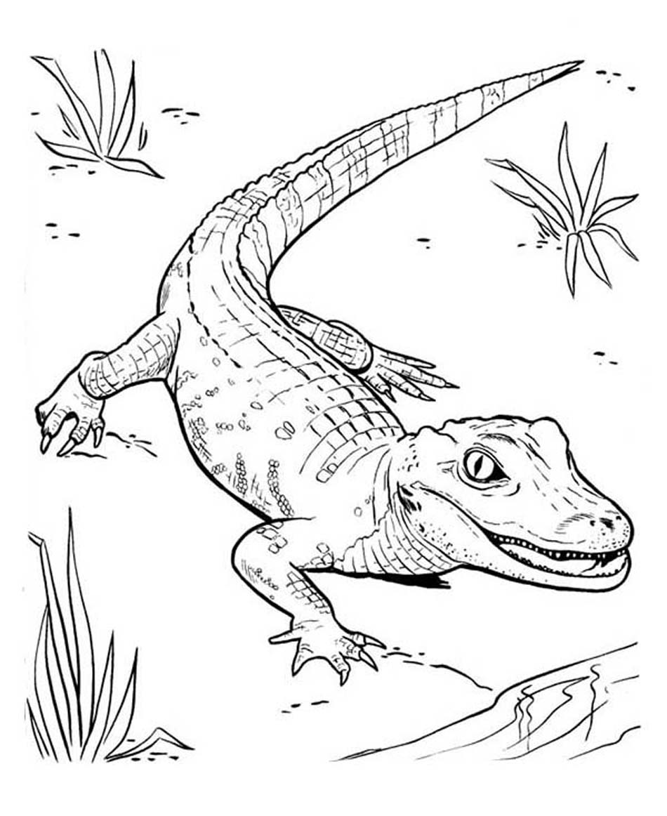 baby alligator coloring pages