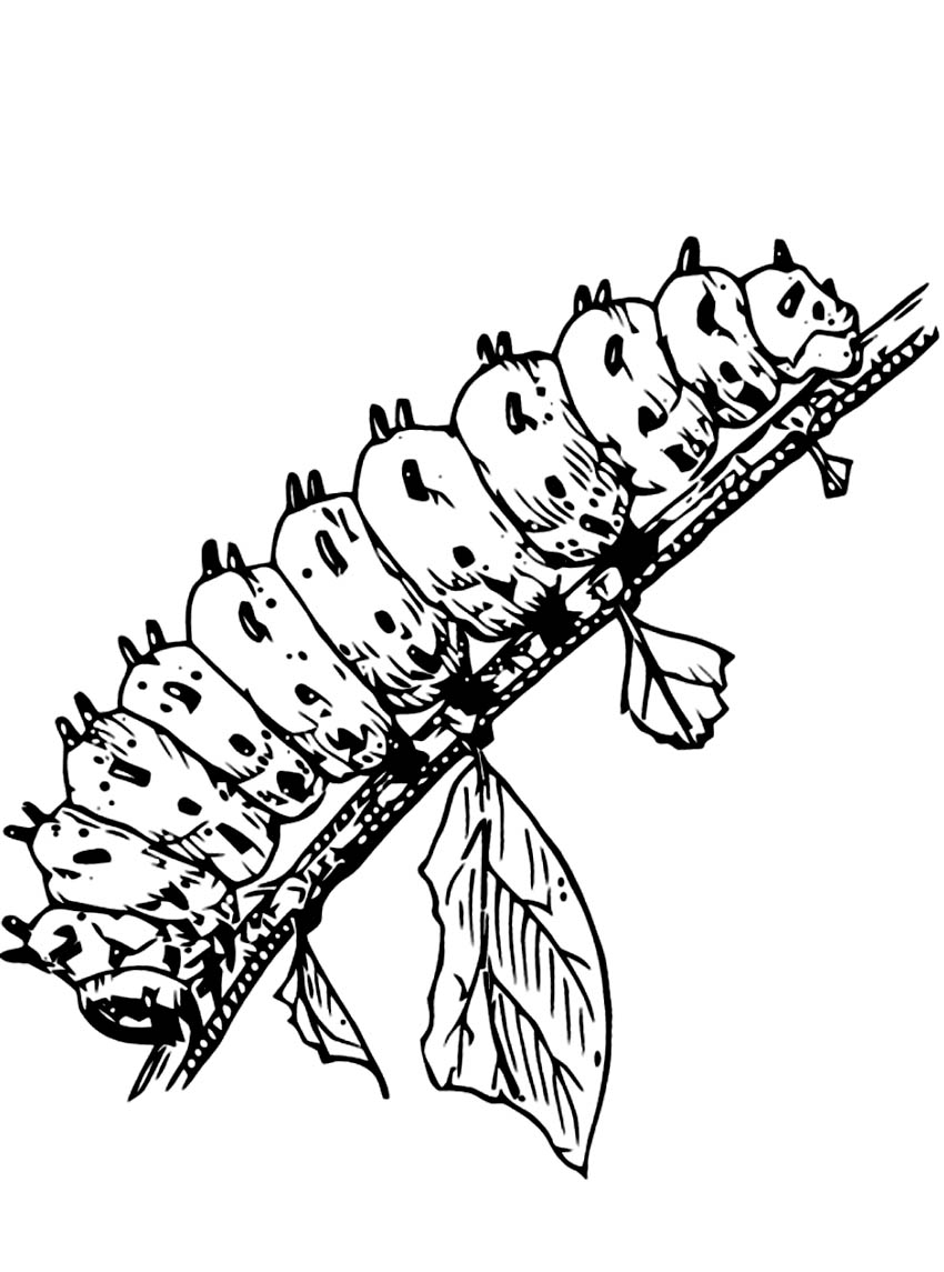 Free Coloring Pages Of Butterfly Cocoon