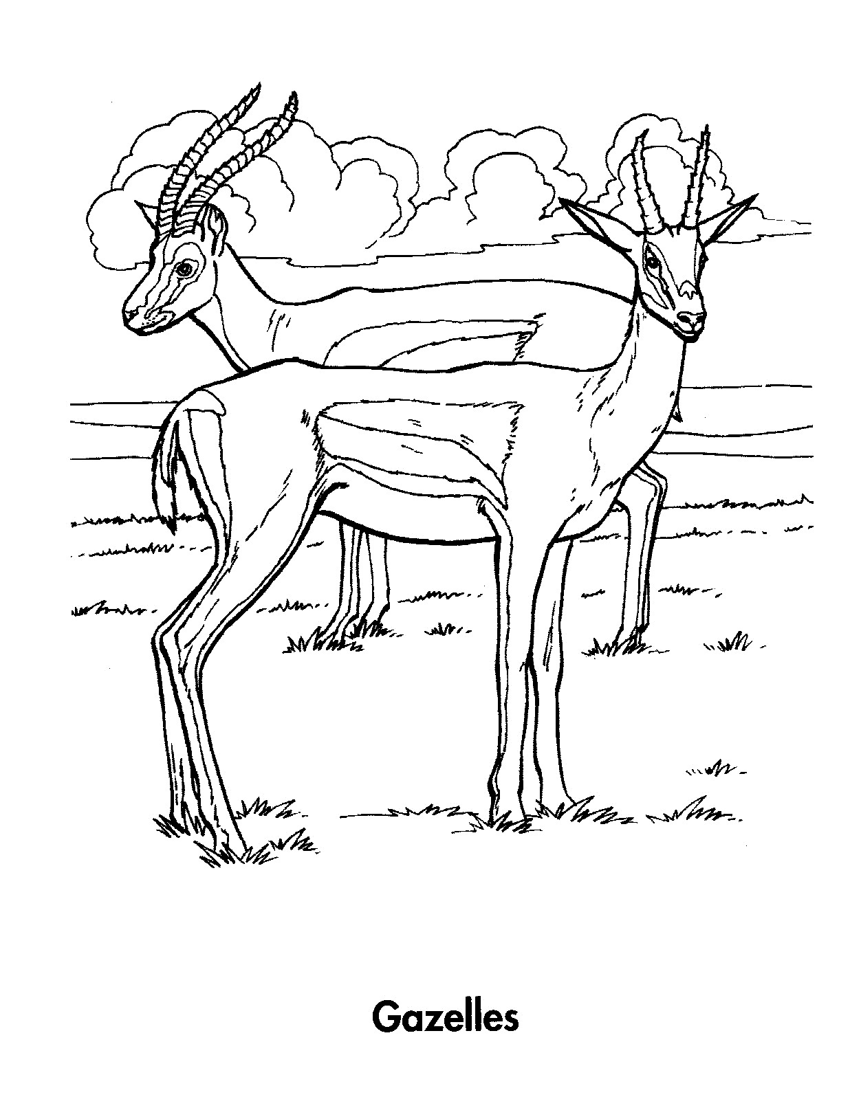Coloring pages deer - Coloring Pages Of Deer