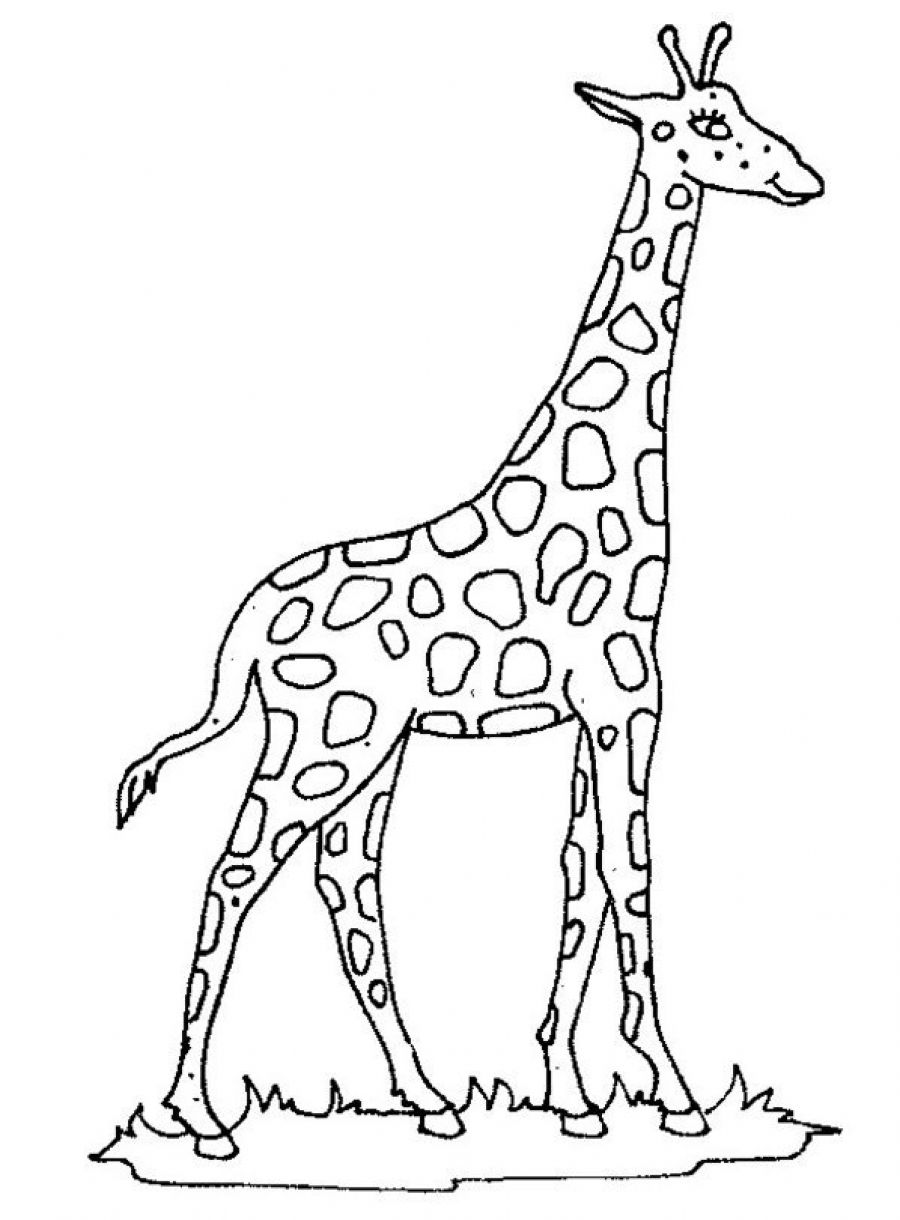 printable giraffe coloring pages me - Giraffe Color Page
