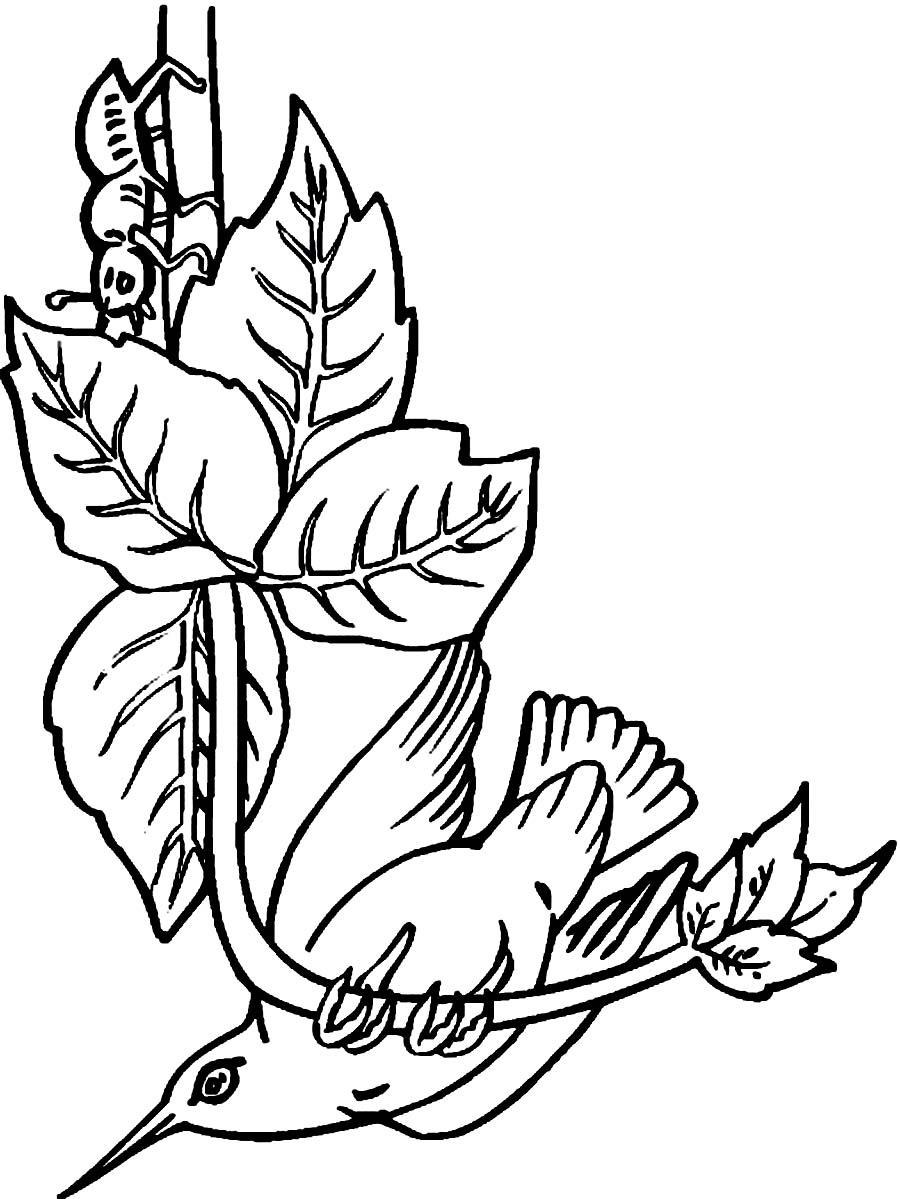 Hummingbirds and flower coloring pages sketch coloring page for Hummingbird coloring page