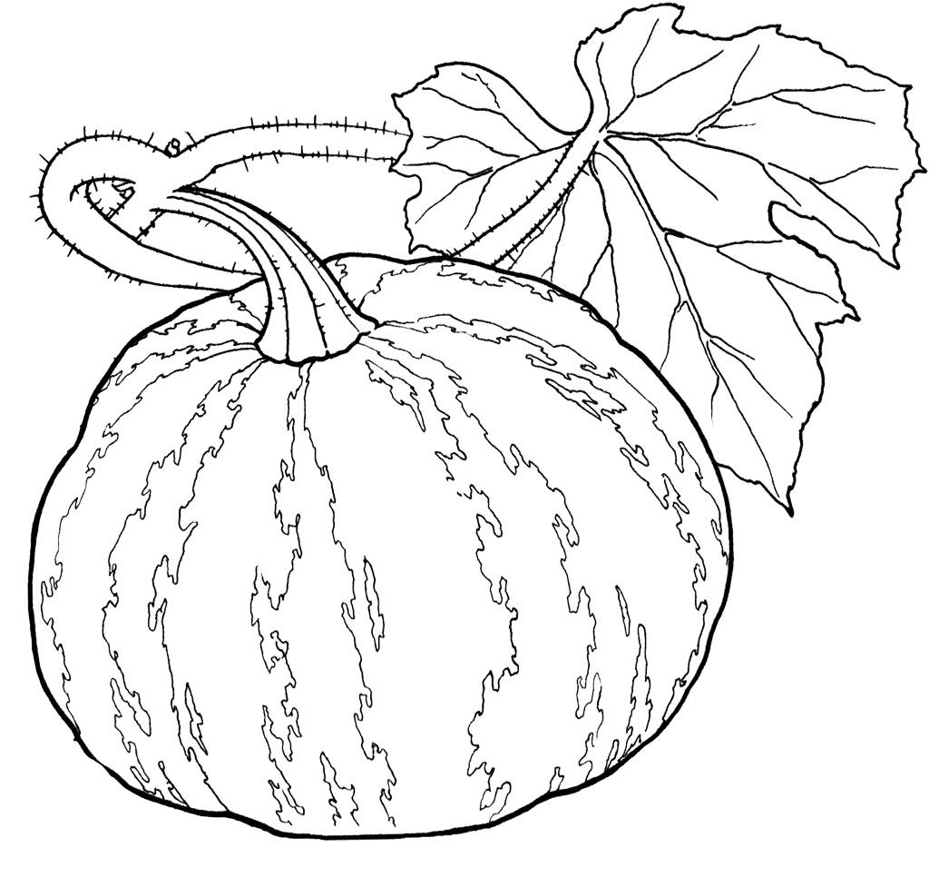 Printable Pumpkin Coloring Pages | Coloring Me