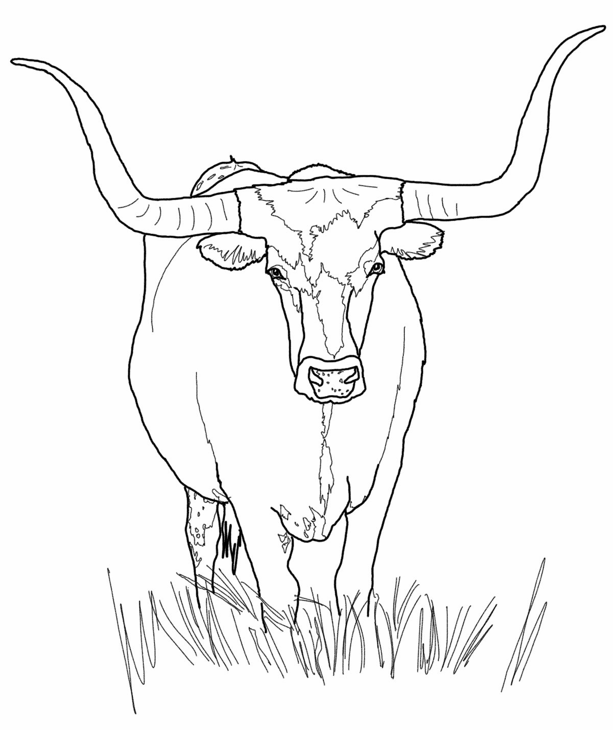 cow coloring pages print - photo#35