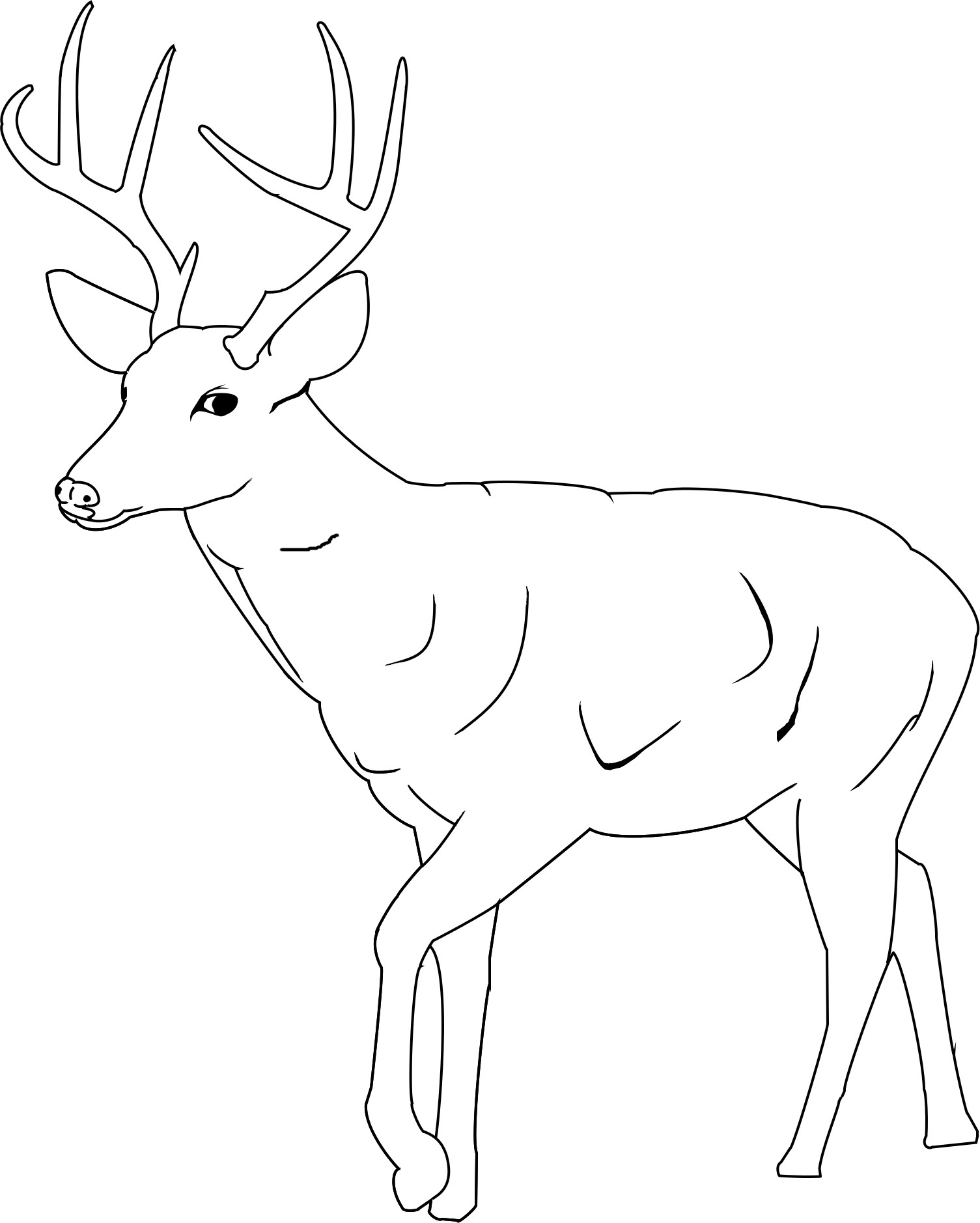 deer coloring pages - photo#32
