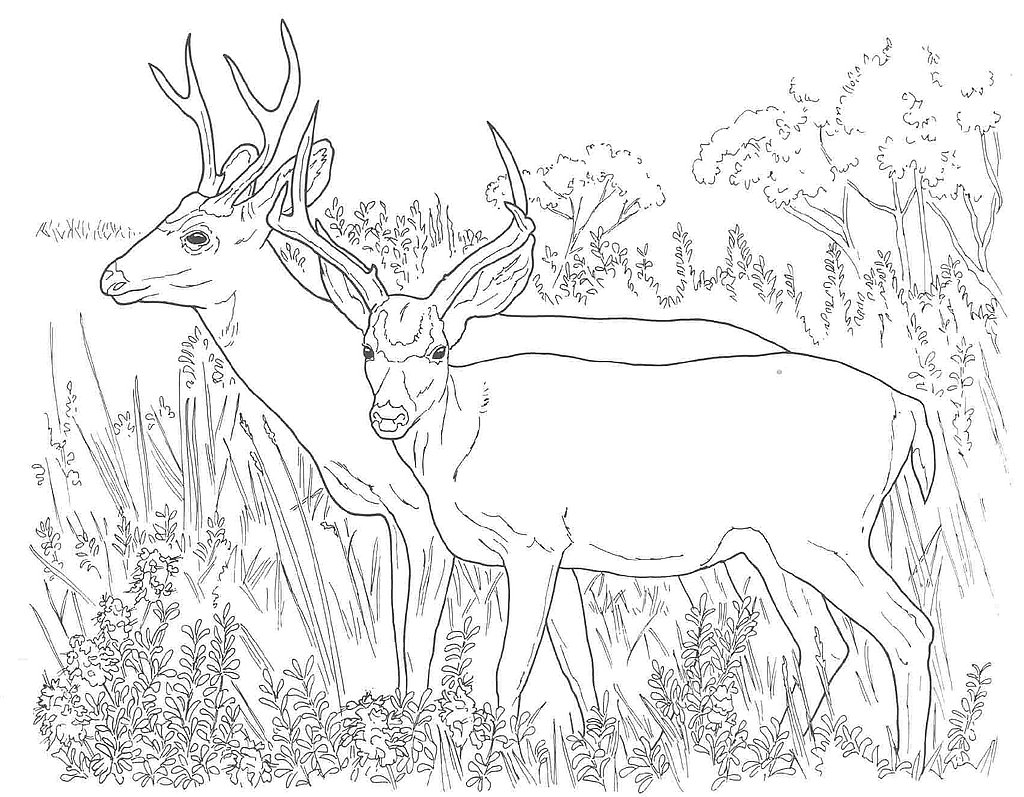 Printable Deer Coloring Pages Coloringme Com