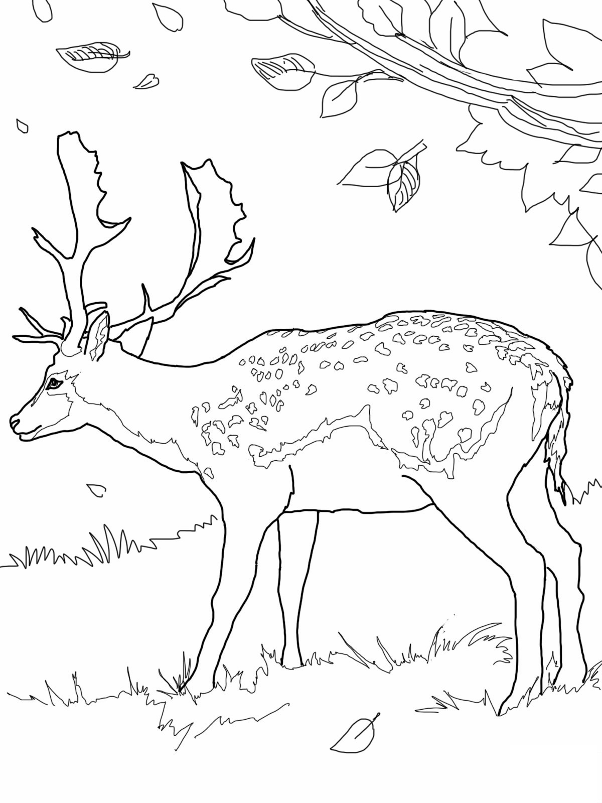 Free coloring page deer - Deer Printable Coloring Pages