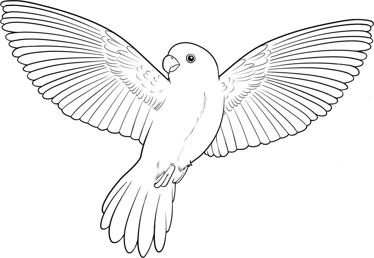 parrot coloring pages bird - photo#32