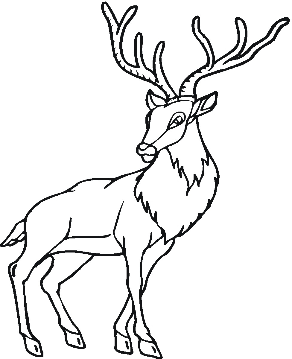 Deer Animals Coloring Coloring Pages