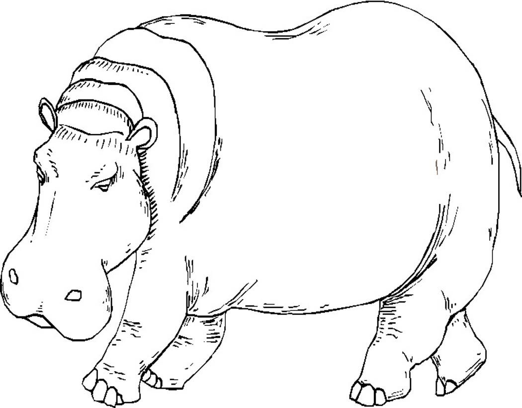 hippopotamus coloring pages to print - photo#6