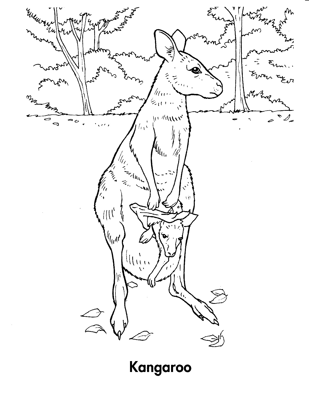 Free coloring pages kangaroo