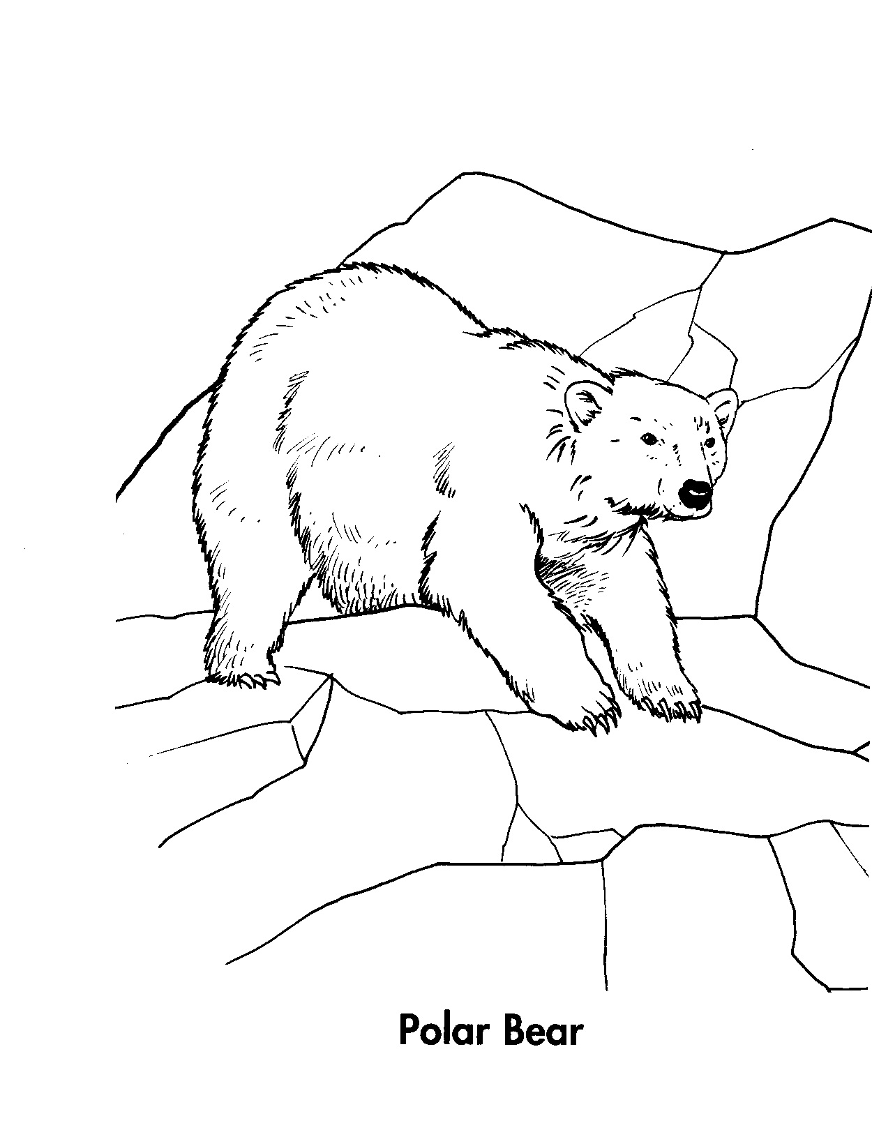 Free Coloring Pages Of Polar Bear Cartoon Polar Color Page