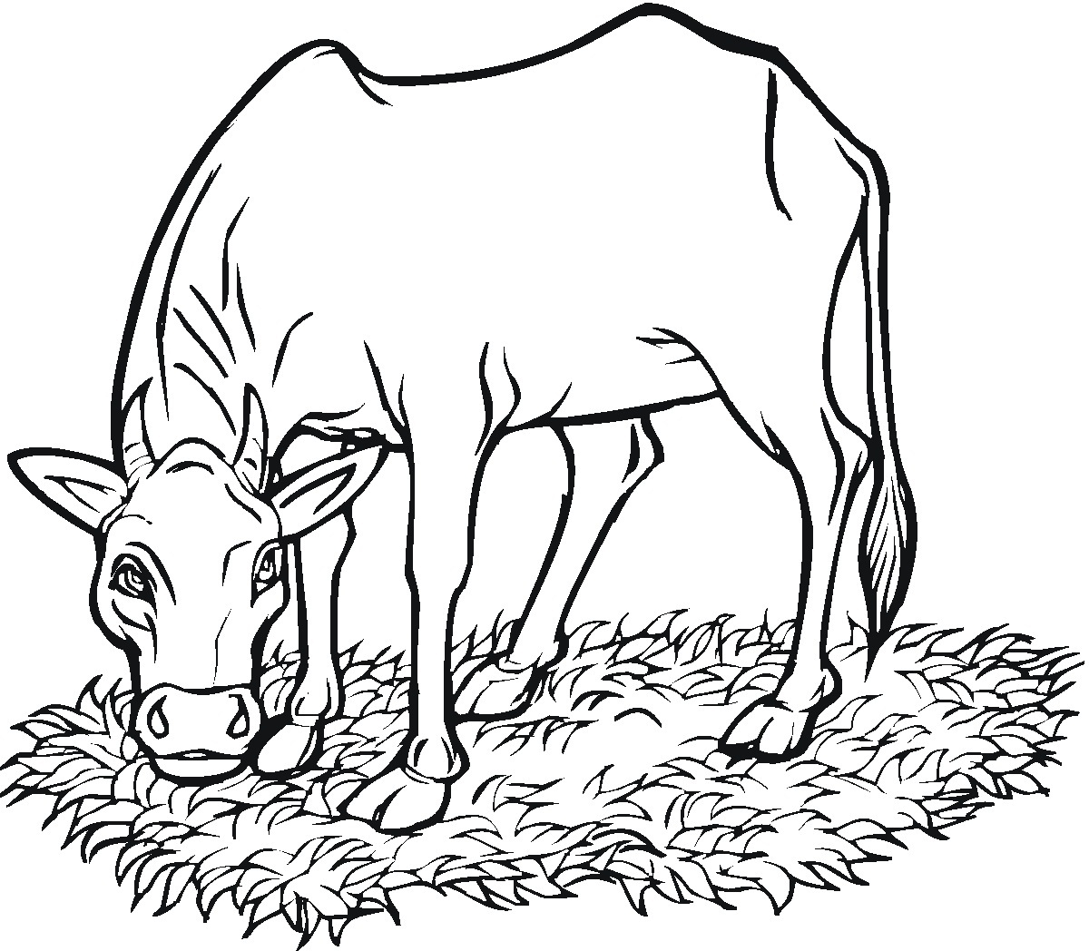 Printable Cow Coloring Pages | ColoringMe com