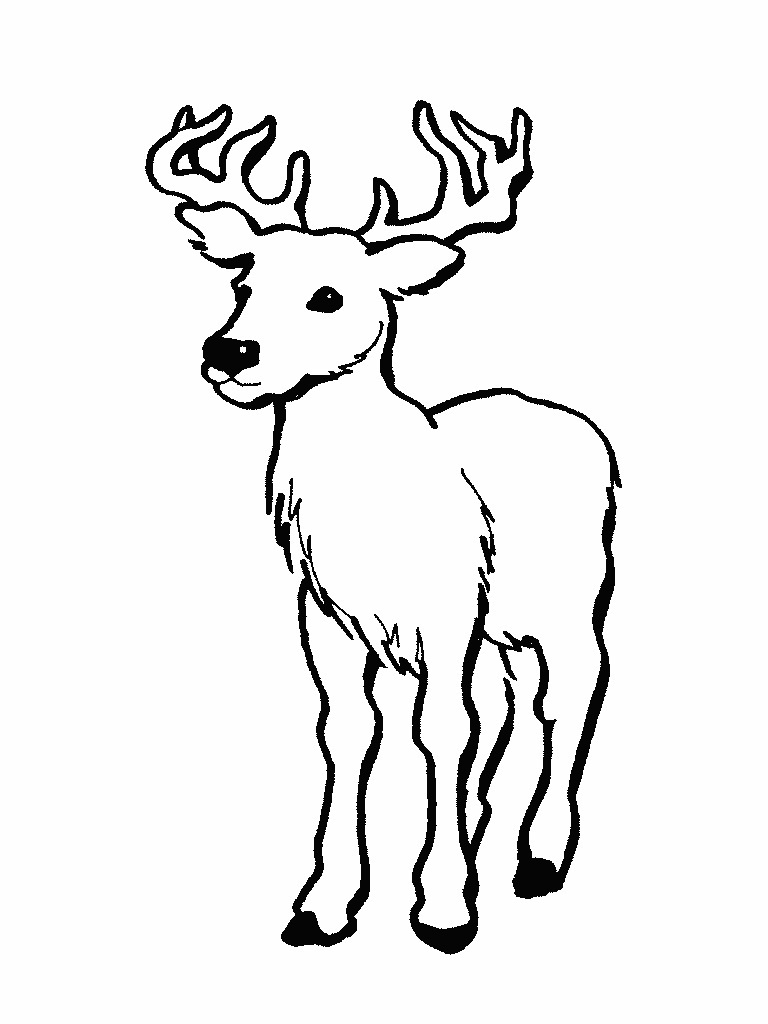printable deer coloring pages coloring me